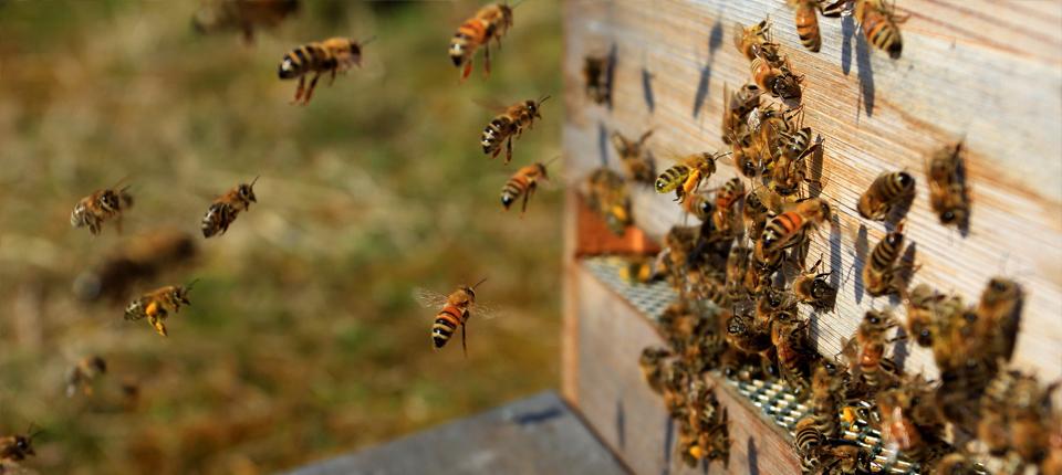 Cum ne putem da seama că mierea pe care o cumpărăm este de calitate