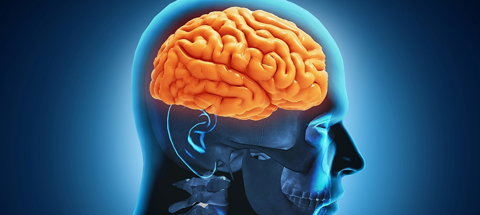Cercetătorii ruşi au descoperit «sediul» conştiinţei umane