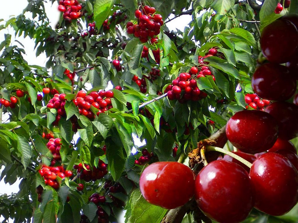 Tradiții și obiceiuri în luna lui Cireșar